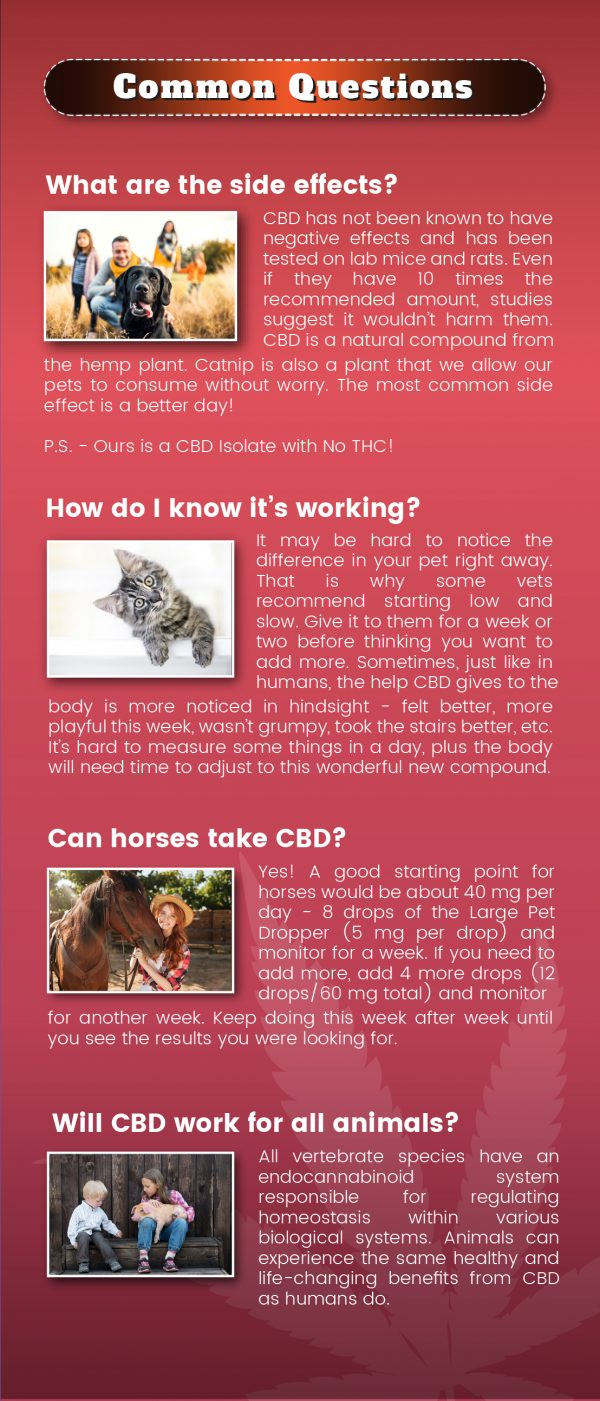 CBD Pets Brochure ~ 100ct